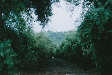 Rolive-trees