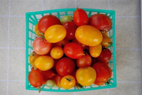 Rtomatoes