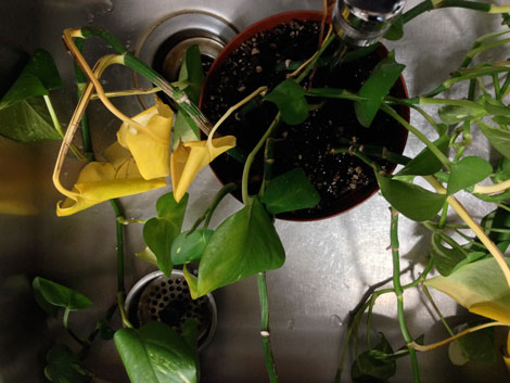 AM_plant