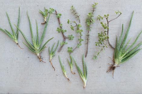Newplantings