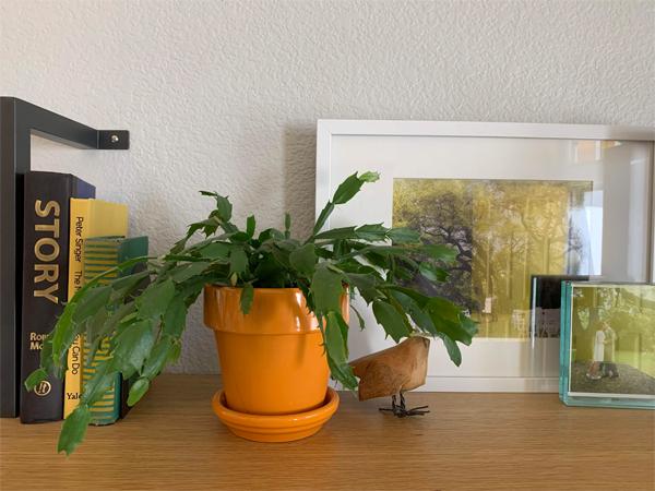 200328_plants_christmas