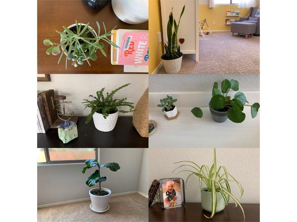 Houseplant Tour | RISING*SHINING