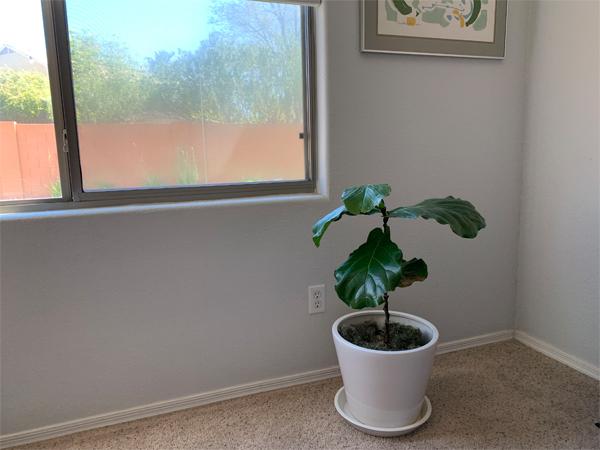 200328_plants_fiddle