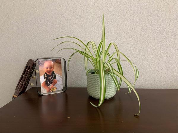 200328_plants_spider