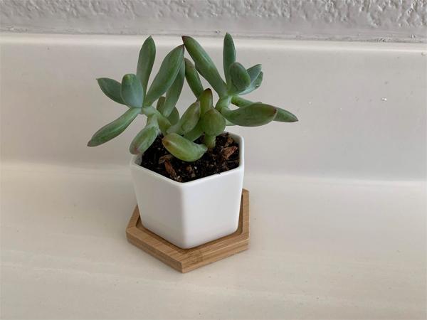 200328_plants_succulent1