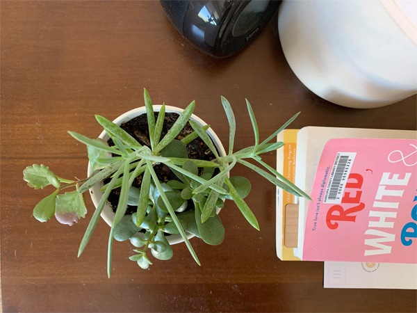 200328_plants_succlulent3